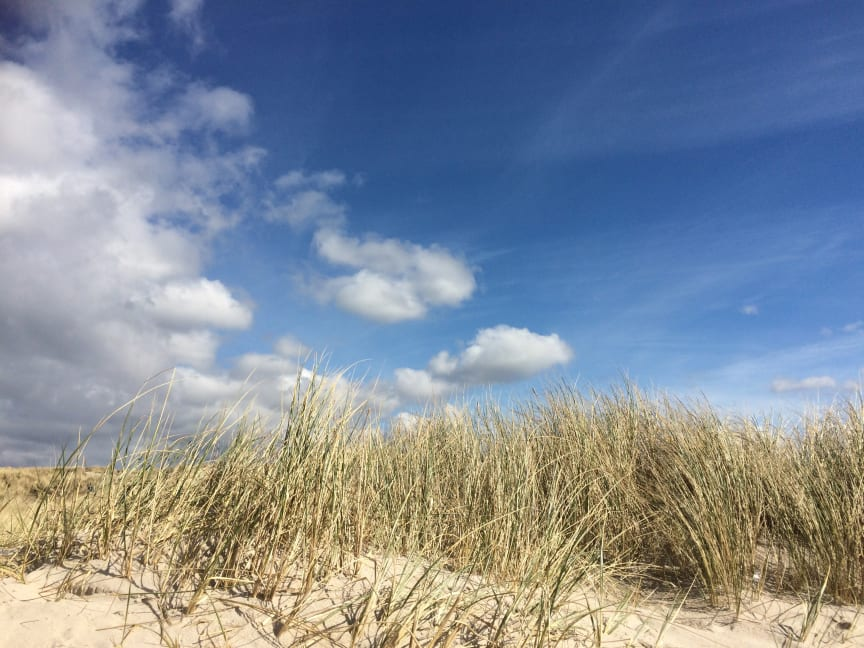 Ostsee genießen in den Maritim Hotels