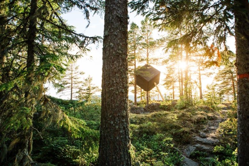Arknat Höga Kusten_The Tree Cube_Körning
