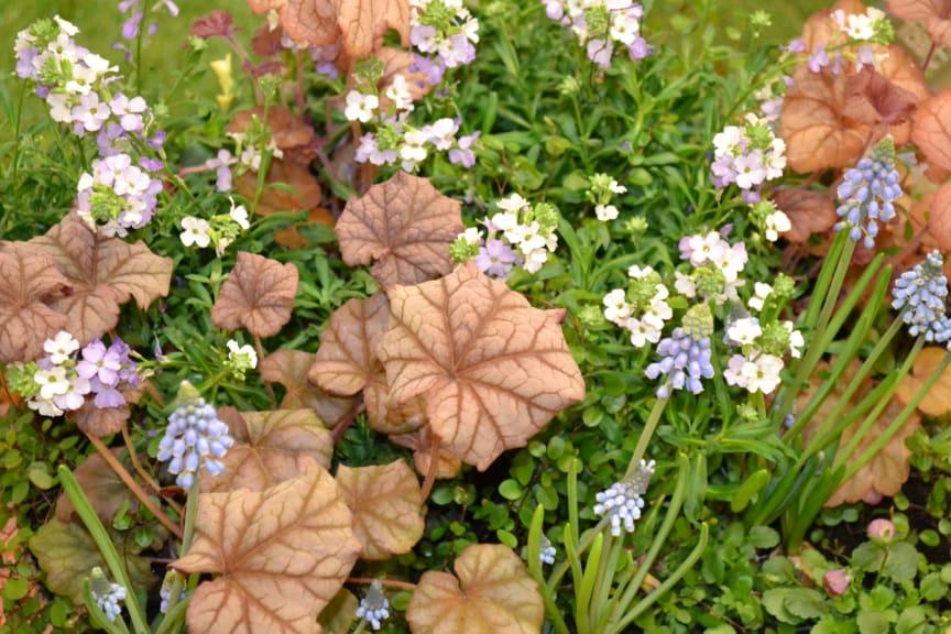 Vårplantering 1