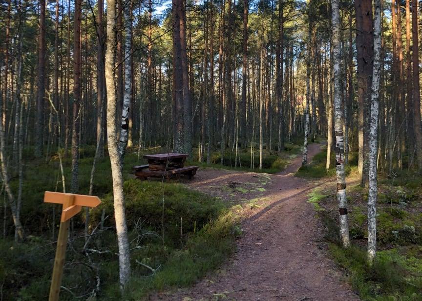 Rastplats vid Molkomsmossens vandringsled