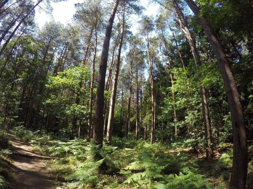 Explore family friendly walks in Hertfordshire