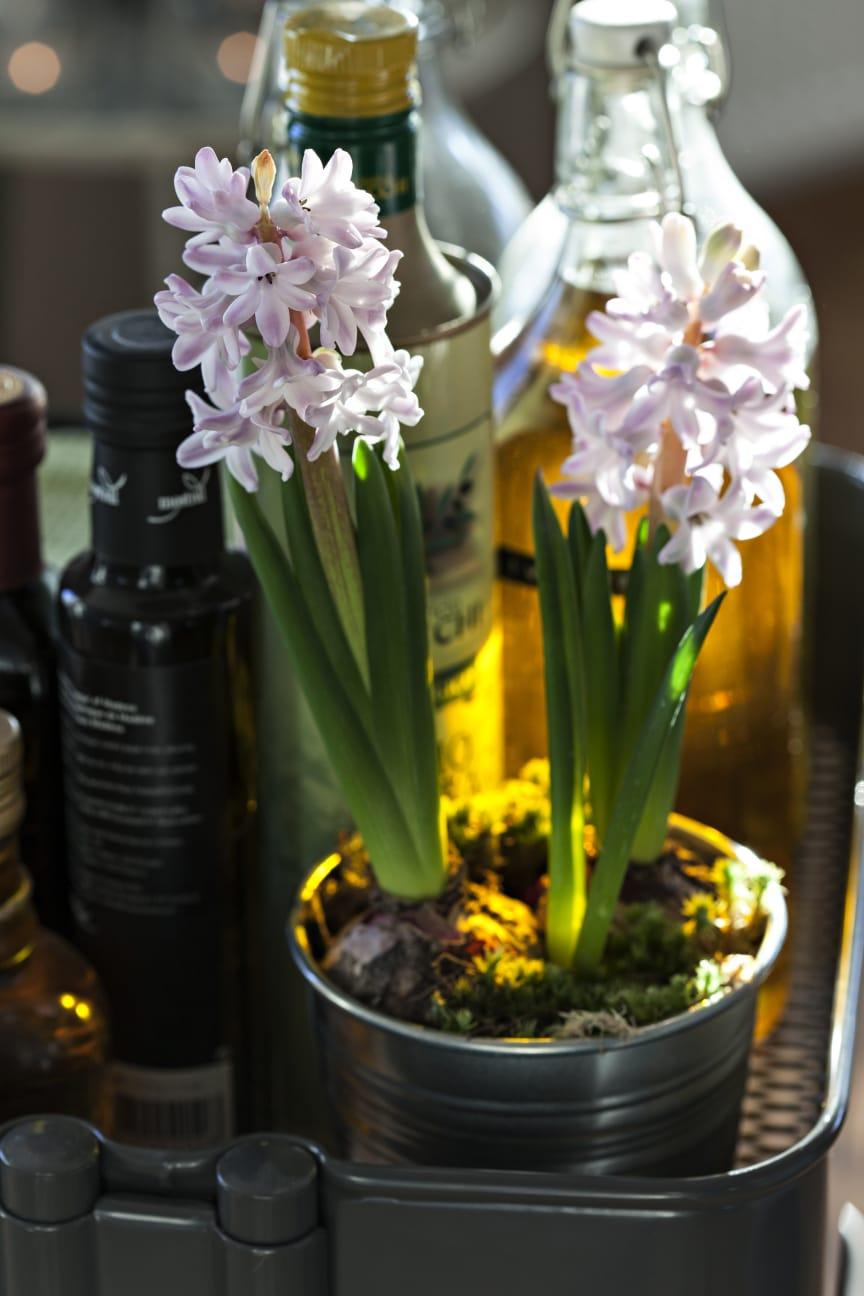 Hyacinter i köket