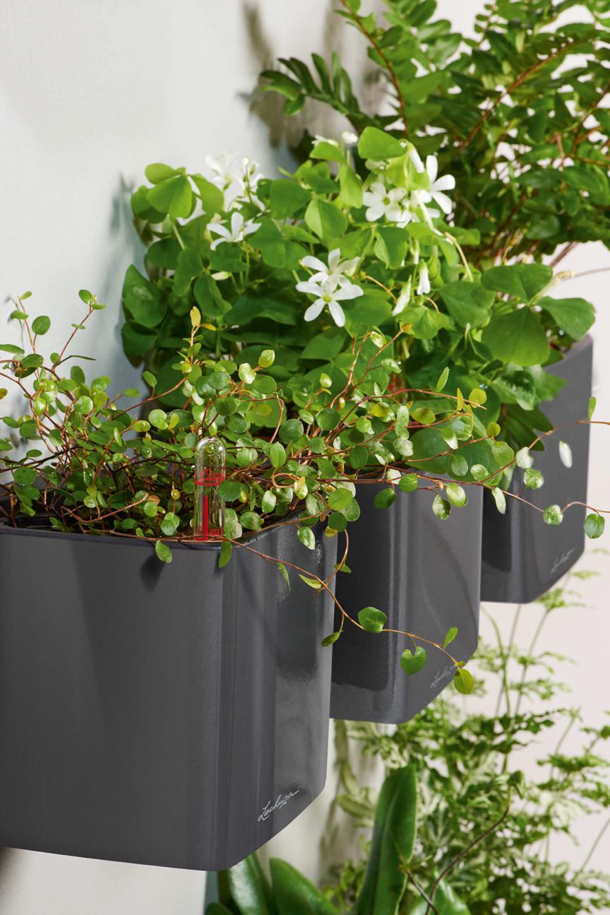 Hängende Pflanzgefäße mit dem Original Bewässerungssystem