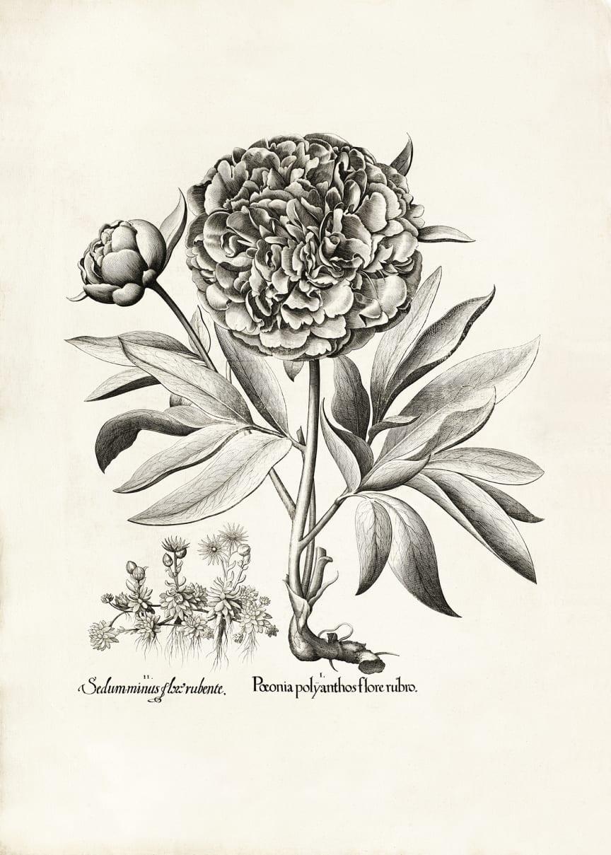 Drömparken_botanisktverk2