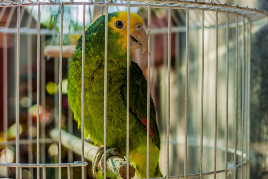 Legal and Illegal Wildlife Trade between Mexico and the EU