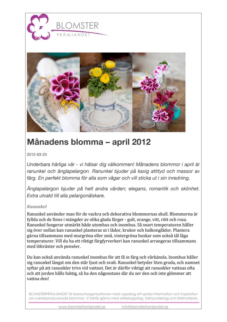 Månadens blomma – april 2012