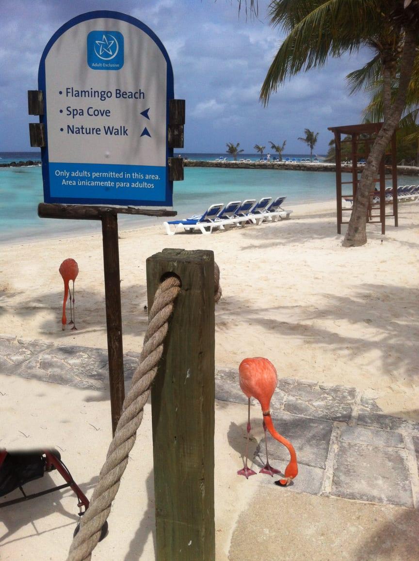Renaissance Ocean Suites på Aruba har egen tropeø med to badestrande.