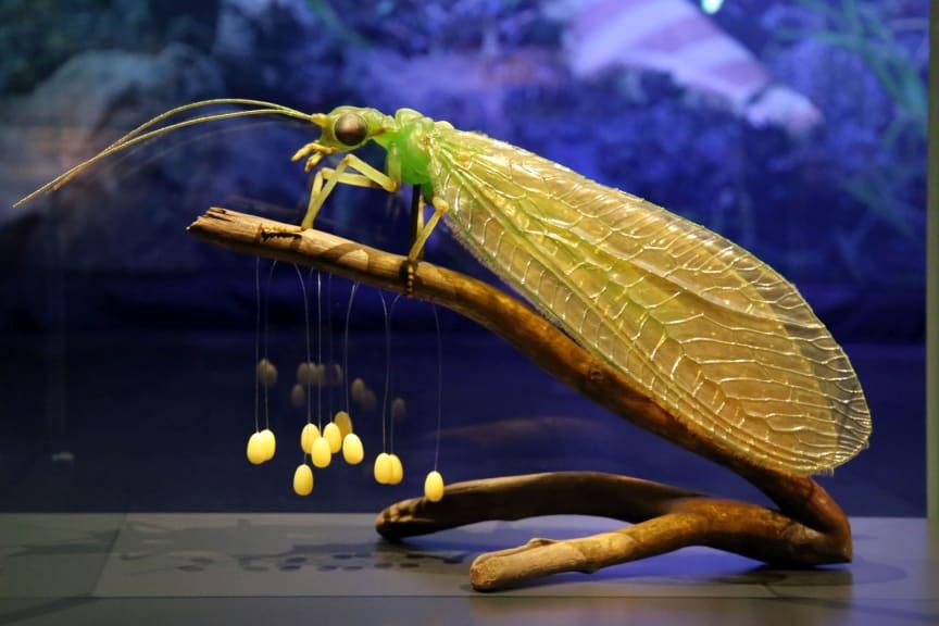 Gemeine Florfliege mit Eigelege (Modell von Julia Stoess, Maßstab 30:1)
