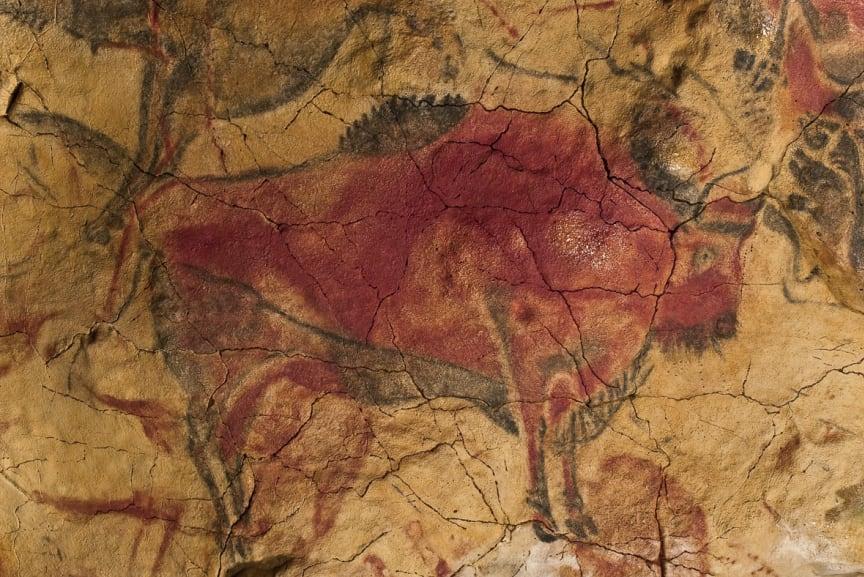 Bild: Grottmålning av bisonoxe från norra Spanien, cirka 30 000 år gammal.
