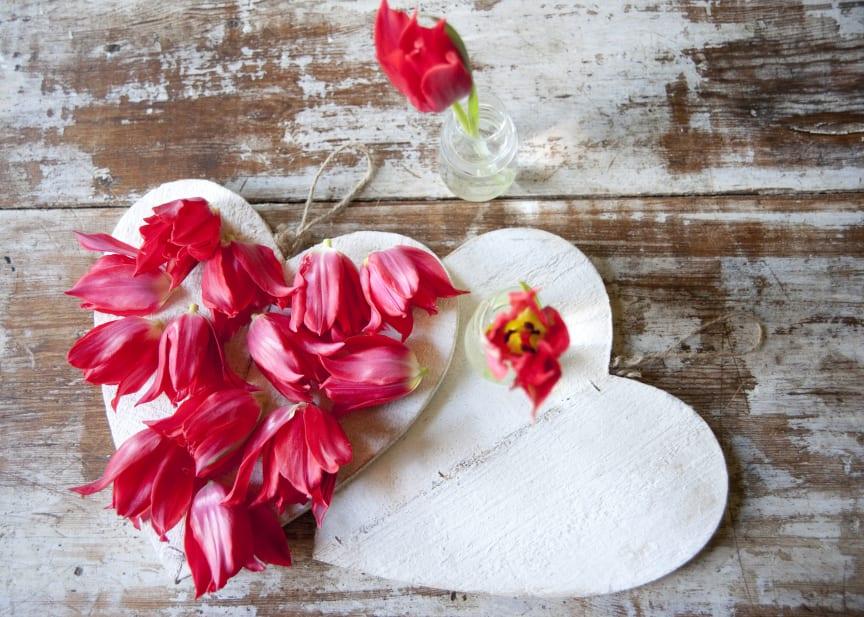 Arrangemang med röda tulpaner