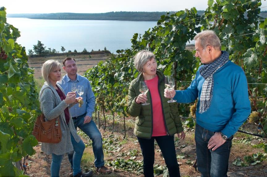Weinprobe Weinberg Großräschener See