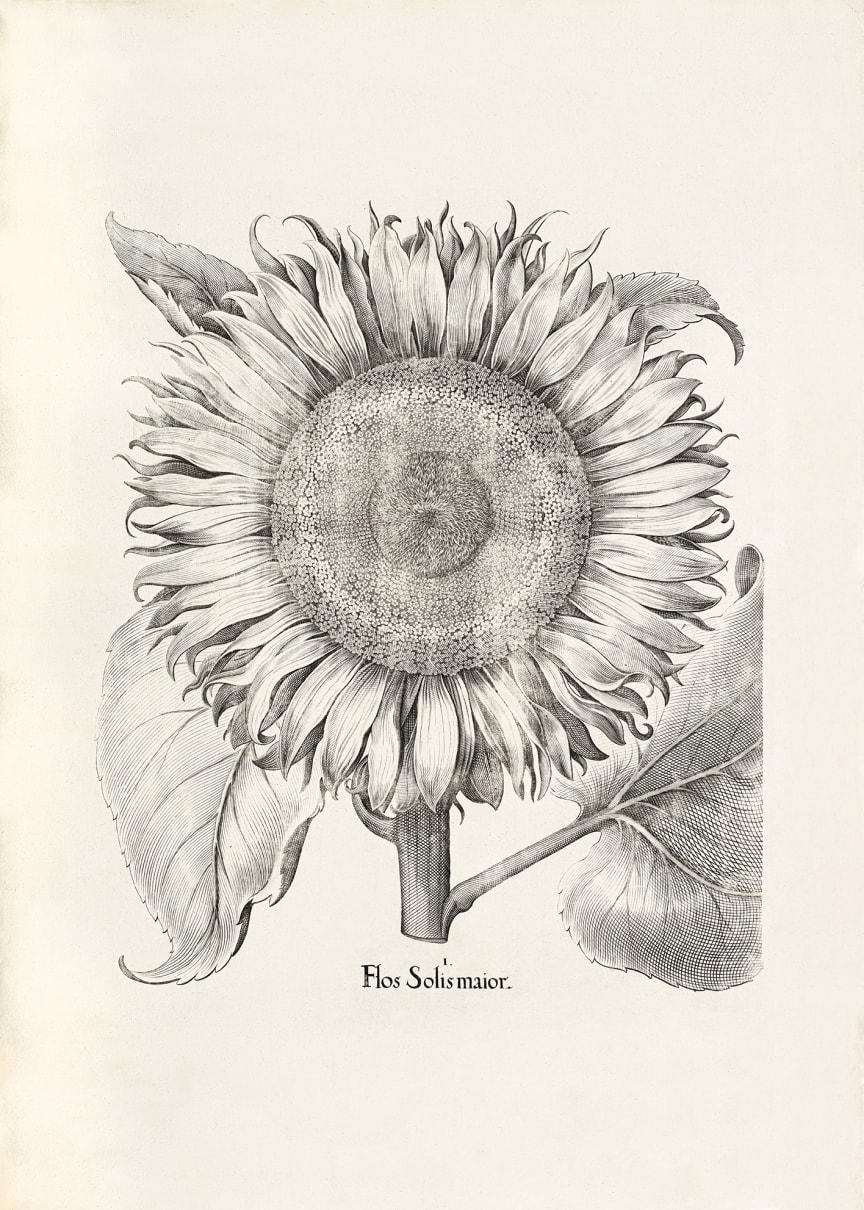 Drömmarnas park:botaniskt verk