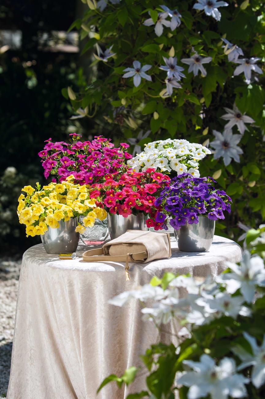 Blomsterbord med petunia