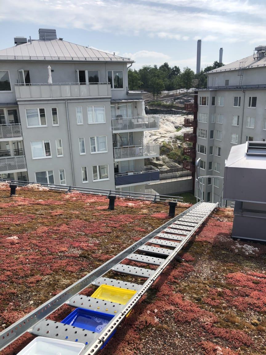 Färgskålar på tak