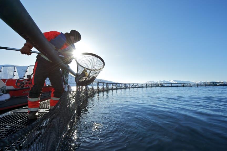 På merdkanten - sea cages