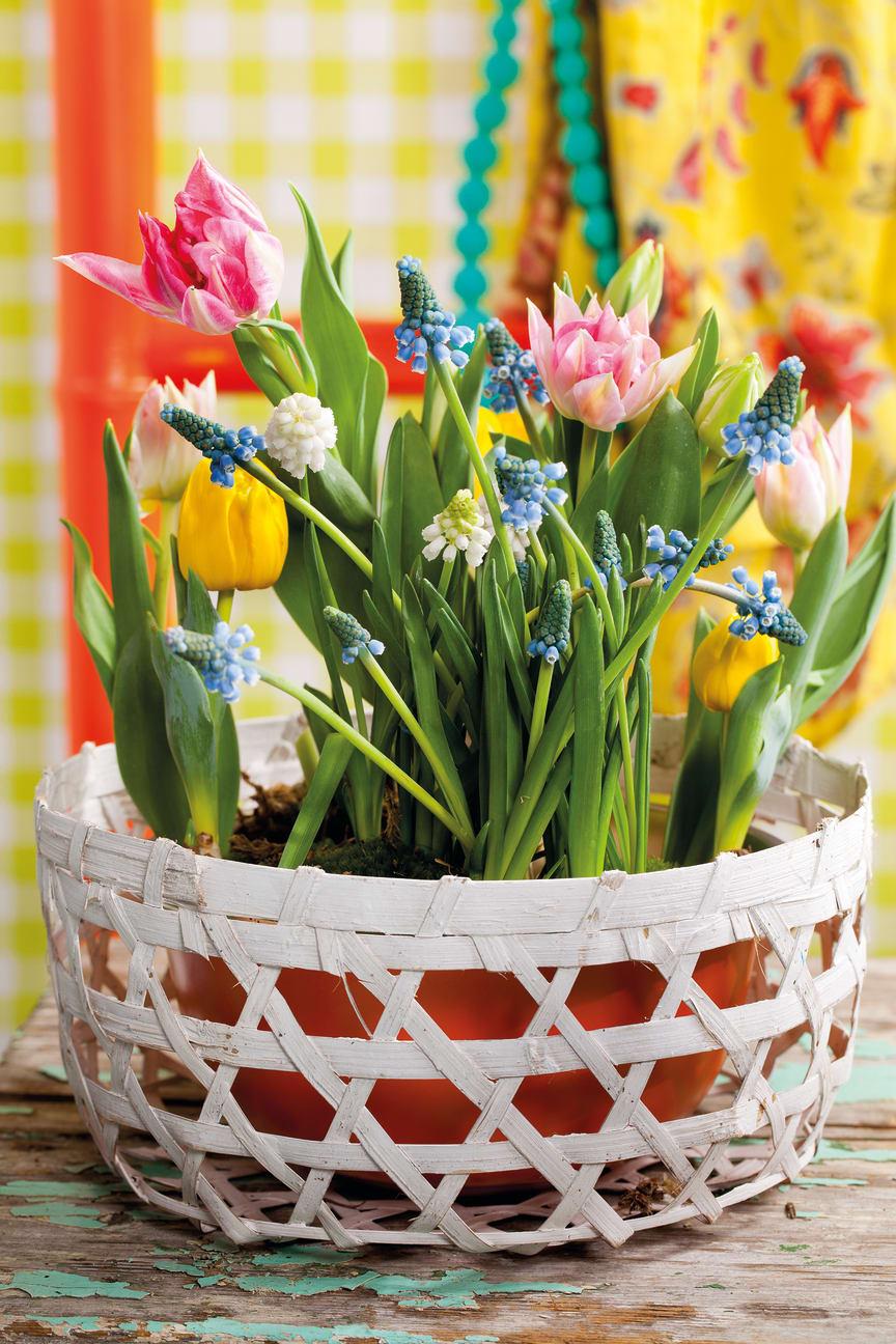 Vårens lökväxter