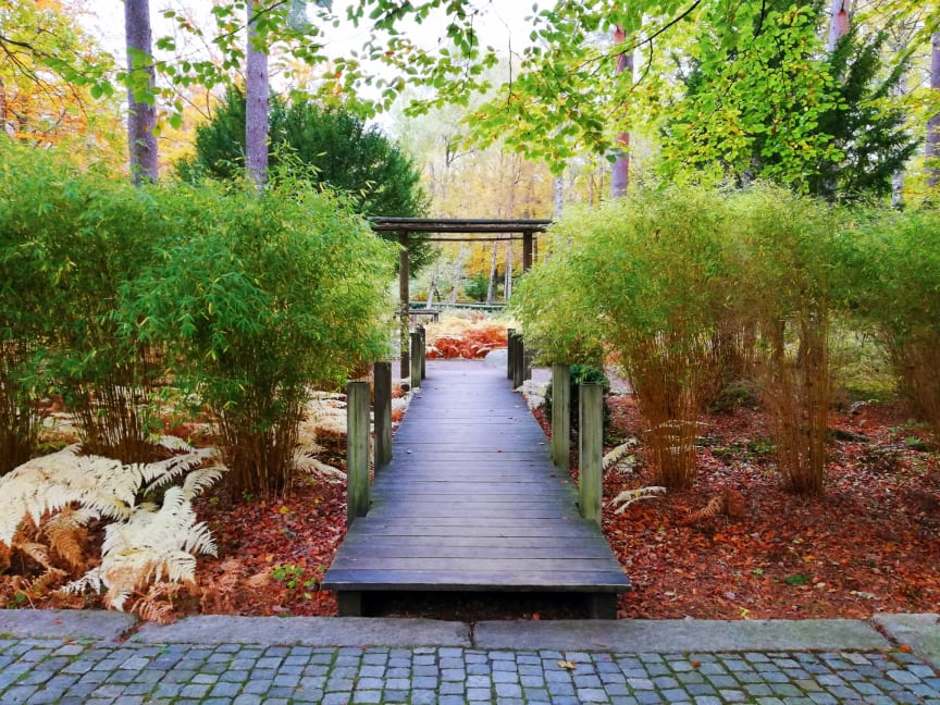 ÅretsUteRum_Japanska trädgården VI_foto Nathalie Ridell