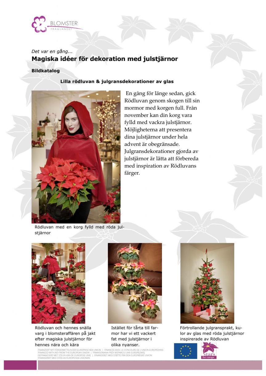 Magiska dekorationer med julstjärnor - inspiration och instruktioner