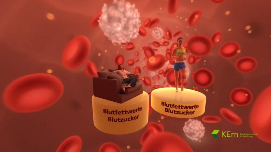 VR-Animation-Blut: Bei regelmäßiger Bewegung sinken Blutfettwerte und Blutzuckerspiegel