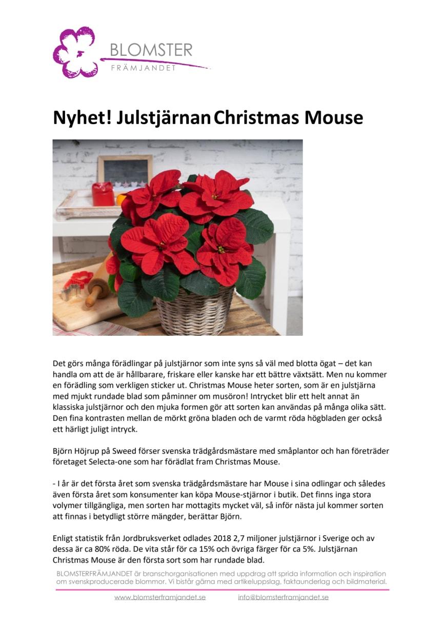 Nyhet! Julstjärnan Christmas Mouse