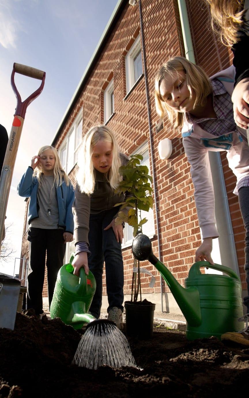 Gröna skolgårdar