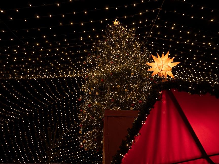 5. Weihnachtsbaum in Köln