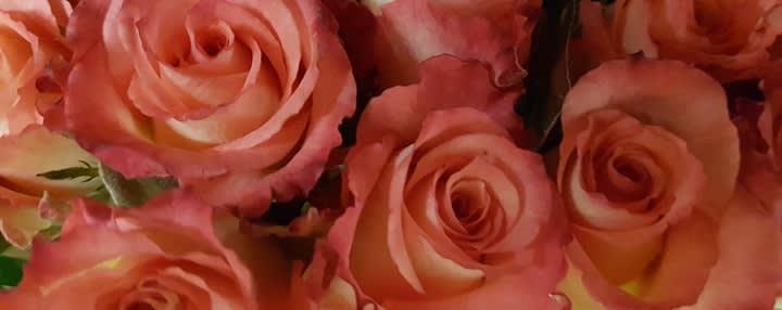 Valentinstag special lufthansa