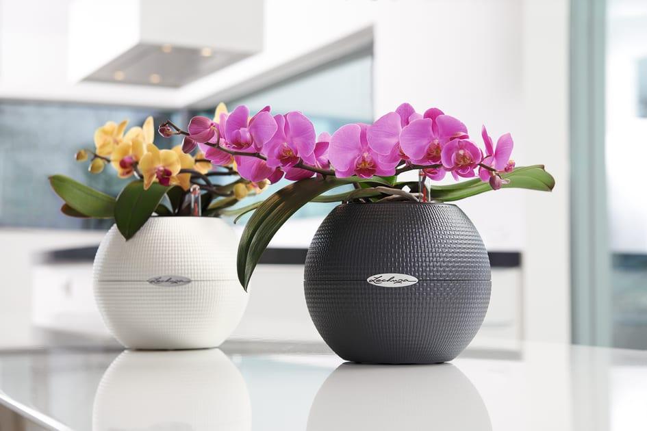 In Voller Blute Prachtvolle Orchideen Am Tag Der Zimmerpflanzen
