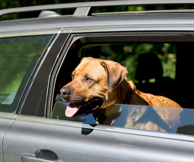 Varma bilar dödsfälla för hundar | Sveland Djurförsäkringar
