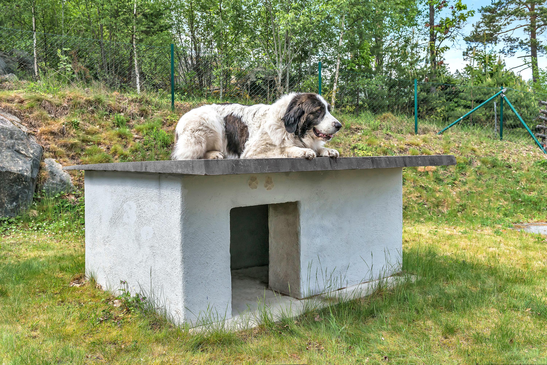 Bygg et isolert hundehus i betong 3