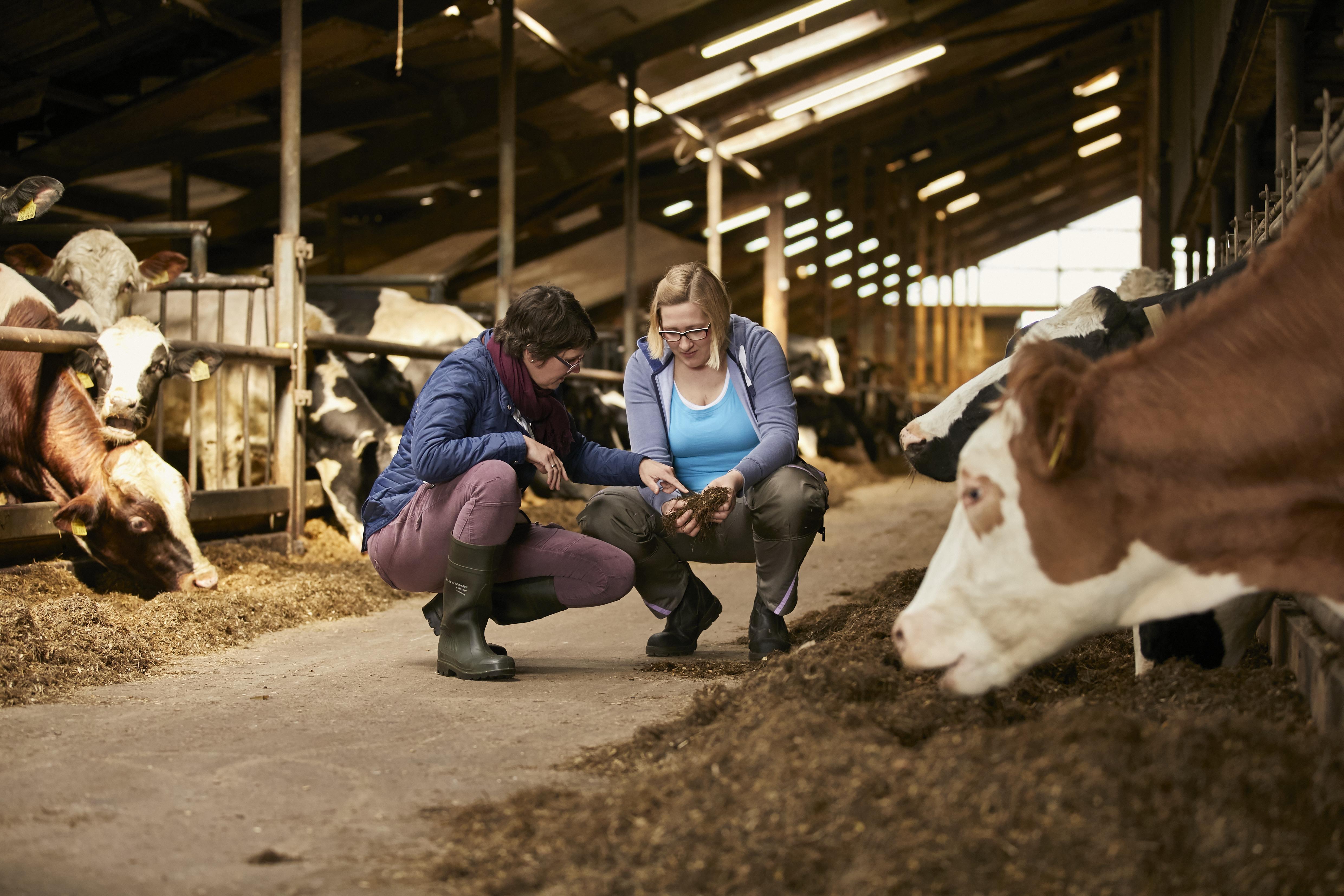 Ein Meilenstein auf dem Weg zur Klimaneutralität: Arla Foods startet europaweites Klimacheck-Programm für seine Milchbetriebe