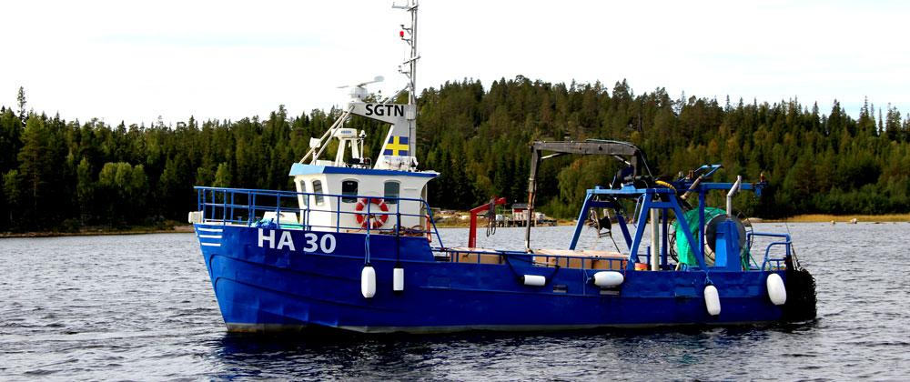 Guldhaven Pelagiska brinner för det lokala fisket i Norrbotten