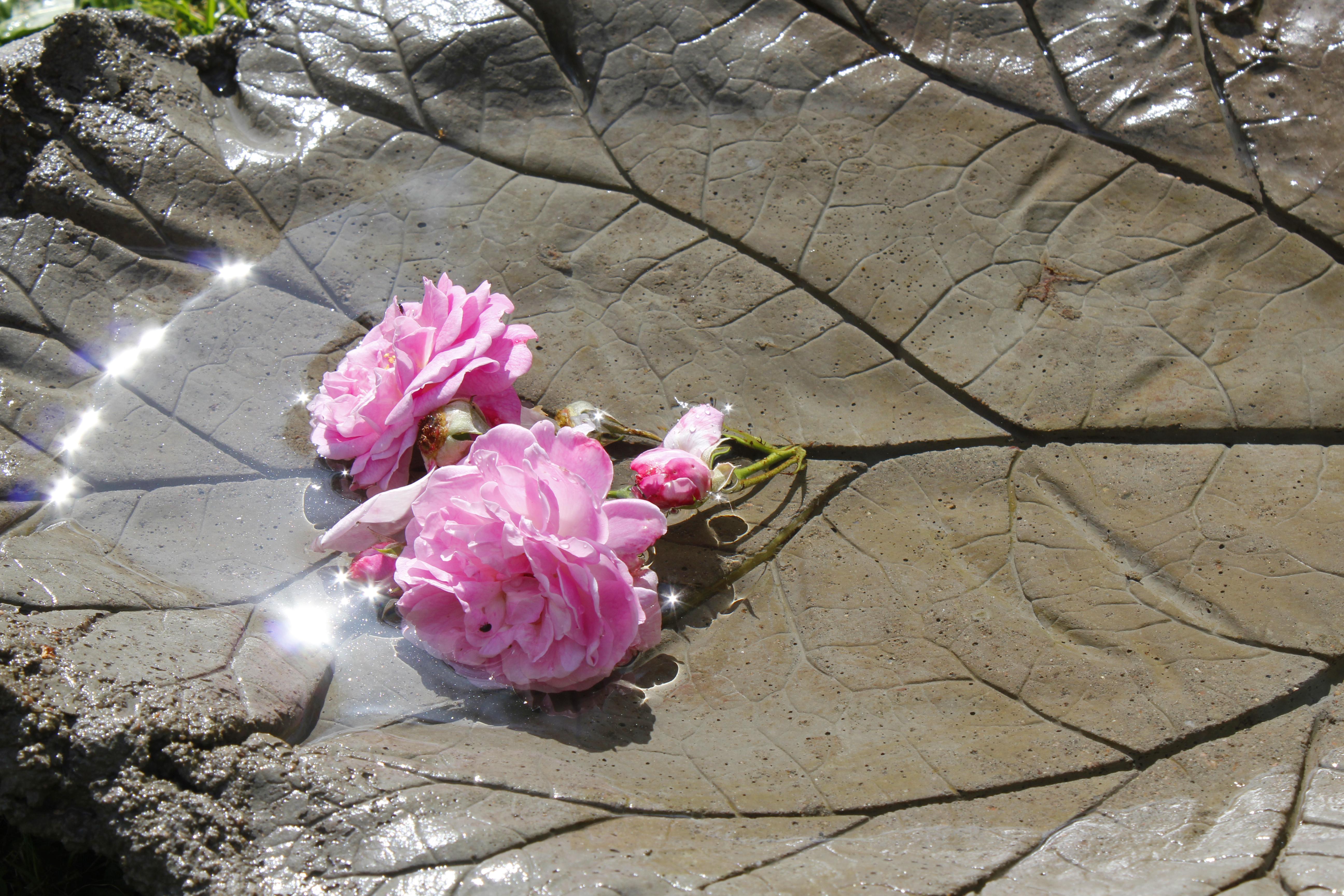 DIY – Støp rabarbrablad i betong 2
