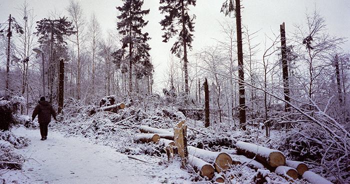 Skrylle 4 december 1999, dagen efter stormen. Foto: Gert-Inge Tapper
