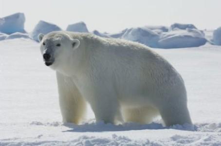 Polar Bear Packaging