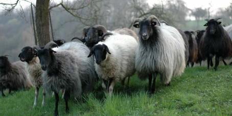 Schafwoll-Pellets – woher kommen die eigentlich?