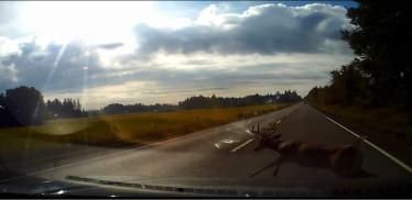 Efteråret er den farlige tid på vejene