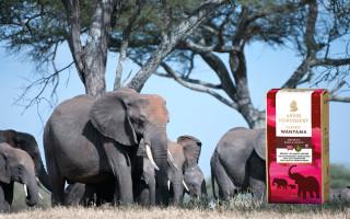 2016 – ett steg i rätt riktning för den afrikanska elefanten!