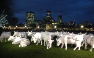 Have you herd? –Dairy Cows Hit the Capital
