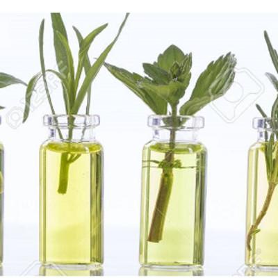 Global Herb Essential Oil Market Analysis 2018 | Growth by Top Companies: Albert Vieille, Berje, Elixens, Ernesto Ventos, Fleurchem, H.Interdonati, INDUKERN INTERNACIONAL