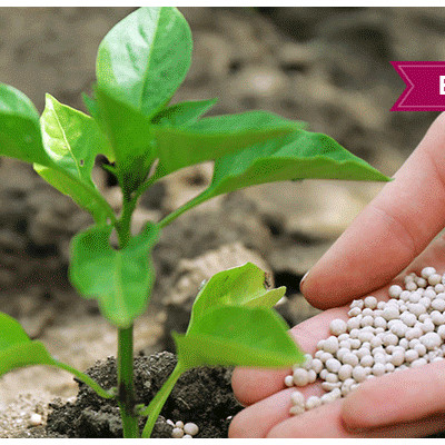 Global Biofertilizers Market Global Industry Analysis, Size, Share, Growth, Trends and Forecast 2017 – 2022