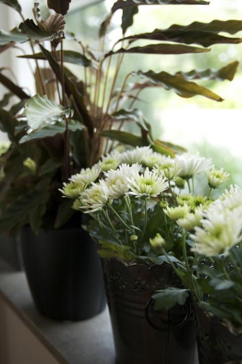 Månadens Blomma september 2009