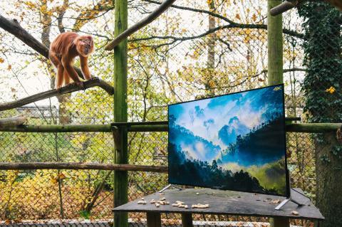 Sony 4K in Zoo_Langurs