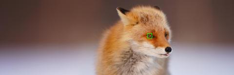 Der KI-basierte Autofokus mit Augenerkennung bei Tieren ist nun für die a6400 von Sony verfügbar
