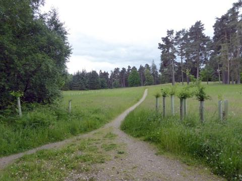 Consultation on compensatory tree planting sites begins