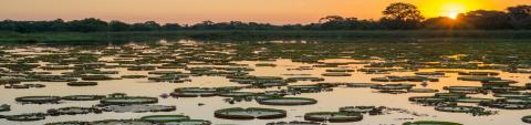 EXPERT COMMENT: Hydroelectric dams threaten Brazil's mysterious Pantanal - one of the world's great wetland