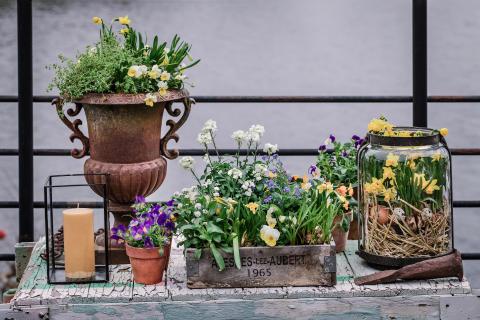 Pigga upp dig med vårens växter