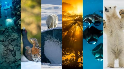 Sony Nordic Wildlife Explorers