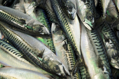 Increased volume and reduced value for exports of pelagic fish in 2017