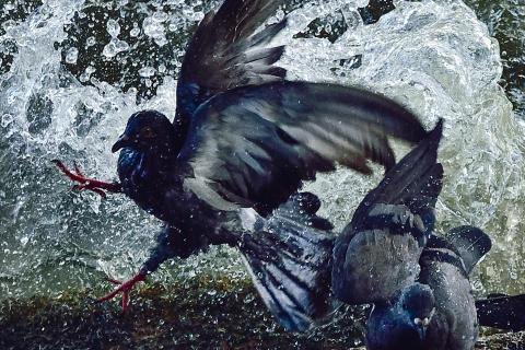Splashing Birds - Winnaar, Open, Split Second